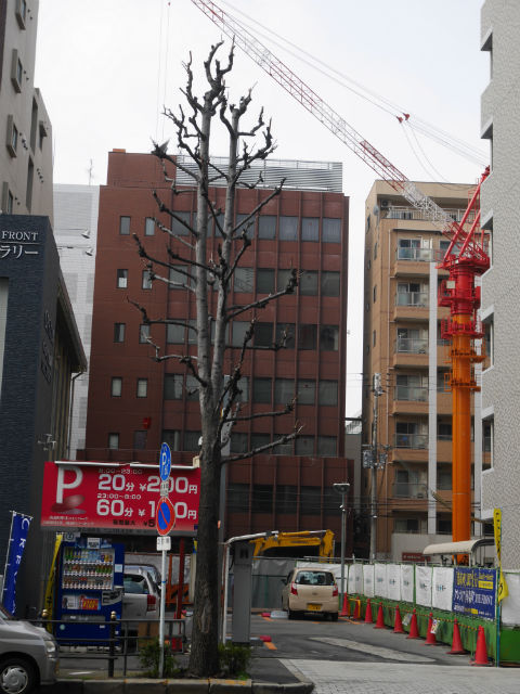 crevia-minamimorimachi009